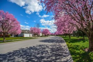 street lined with blooming trees in Barrington Estates